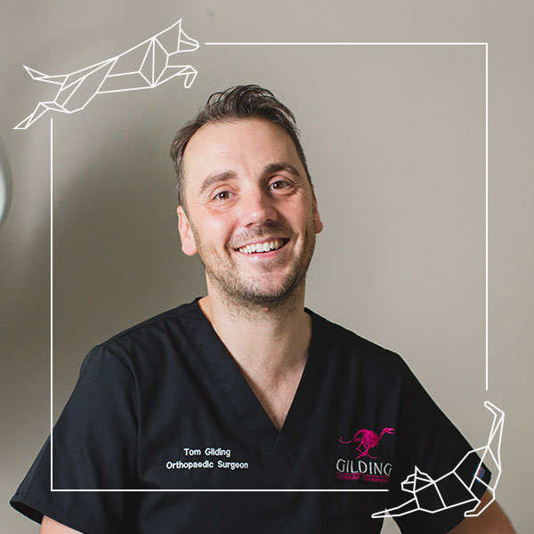 Tom Gilding, Eden Vets Advanced Practitioner in Small Animal Surgery